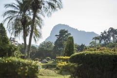 THAILAND PATTAYA KHAO CHEE CHAN GARDEN. The Garden at the Buddha Cliff of Khao Chee Chan at the village of Sattahip near the city of Pattaya in the Provinz stock photography