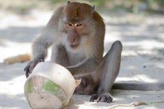 Thailand - Phra Nang Beach Royalty Free Stock Photo