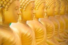 Thailand phuket guld- buddha Royaltyfria Bilder