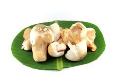Thailand-Pilze Stockfotografie