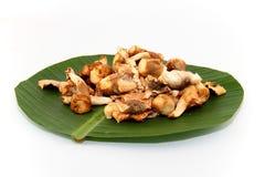 Thailand-Pilze Stockbilder