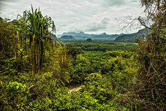Thailand rain forest landscape Royalty Free Stock Photos