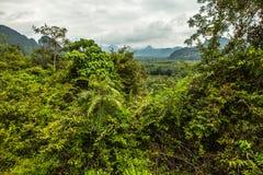 Thailand rain forest landscape Stock Image