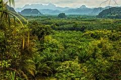 Thailand rain forest landscape Royalty Free Stock Photo