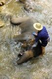 Thailand Region Of Chiang Mai- elephants Stock Photos