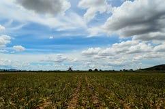 Thailand-Reisfelder und blauer Himmel Stockbilder
