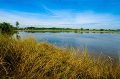 Thailand ricefield Arkivfoton