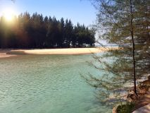 Thailand. The river flows into the sea. Sandy beach with palm trees and Casuarina.  Stock Photography