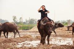 Thailand Rural Traditional Scene, Thai farmer shepherd girl is riding a buffalo, tending buffaloes herd to go back farmhouse. Thai Upcountry Culture, Living royalty free stock image