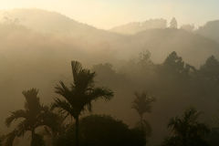Thailands jungle. Tropical jungle in in the morning mist Stock Images