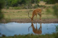 Thailand-Safari Lizenzfreies Stockfoto