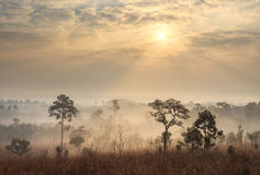 Thailand savanna landscape at sunrise Stock Photo