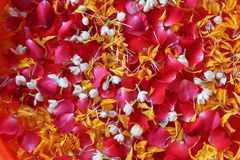 Thailand Songkarn Festival colorful with rose jasmine and marigo. Ld petal in the water background Stock Photography