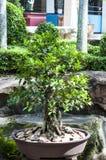 Thailand style garden Stock Photos