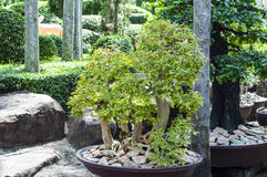 Thailand style garden Royalty Free Stock Photo