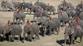 THAILAND SURIN ELEPHANT ROUND UP FESTIVAL Royalty Free Stock Images