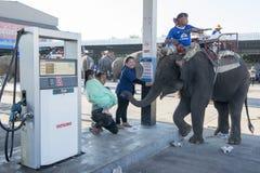 THAILAND SURIN ELEPHANT ROUND UP FESTIVAL Stock Image