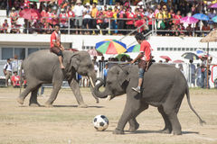 THAILAND SURIN ELEPHANT ROUND UP FESTIVAL Royalty Free Stock Photography