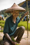 Thailand, thailändische Landwirtmänner, die auf dem Reisgebiet arbeiten Stockfotos