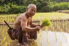Thailand thailändska bondemän som arbetar i risfältet Royaltyfri Fotografi