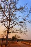 Thailand Tree Sunset Stock Photos