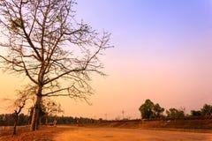 Thailand Tree Sunset Stock Photo