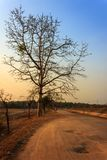 Thailand Tree Sunset Stock Photography