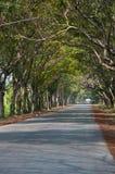 thailand treetunnel Royaltyfria Bilder