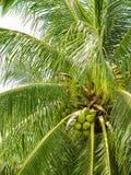 Thailand tropiska träd Arkivbilder