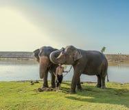 Thailand visar en elefant arkivbild