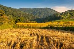Thailands-Reis-Felder Stockbild