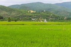 Thais gebied en het Gouden grote standbeeld van Boedha in Wat Mokkanlan Stock Foto's