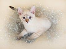 Thais katje in het klatergoud van Kerstmis. Royalty-vrije Stock Foto