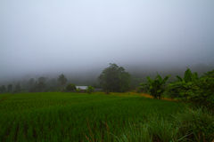 Thais lantgård Royaltyfri Bild
