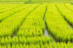 Thais lantgård Arkivbild