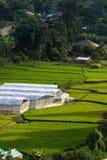 Thais lantgård Arkivfoto