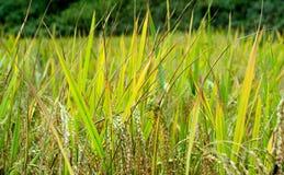Thais lantgård Arkivfoton