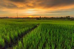Thais lantgård Fotografering för Bildbyråer