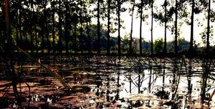 Thais lantgård royaltyfri foto