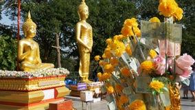 Thais papiergeld op een tak van de Goudsbloem op de achtergrond van grote gouden Boedha, Pattaya thailand stock videobeelden