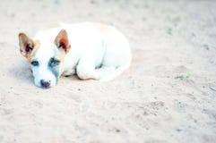Thais puppy op het zand Royalty-vrije Stock Foto's