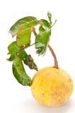 Thais tropisch fruit (santol) Stock Afbeelding