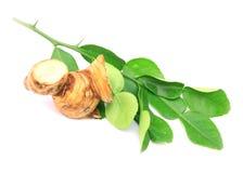 Thais voedselingrediënt voor Tom yum kung Stock Afbeelding