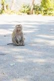 Thaise aap in openbaar park Stock Foto's