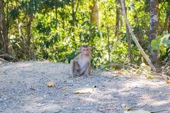 Thaise aap in openbaar park Stock Fotografie