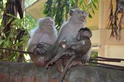 Thaise apen 3 Royalty-vrije Stock Afbeelding