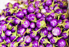 Thaise aubergineaubergine Royalty-vrije Stock Foto