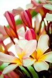 Thaise bloem Royalty-vrije Stock Foto's