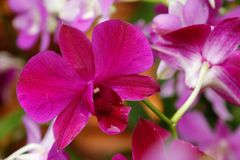 Thaise bloem Royalty-vrije Stock Foto