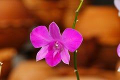 Thaise bloem Royalty-vrije Stock Fotografie